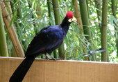 Oiseau rare !!
