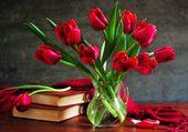 tulipes rouges par hélène