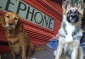 Deux adorable chien