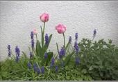Joli printemps