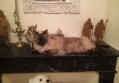 Lilli, chatte décorative