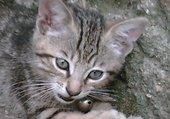 mon bébé chat
