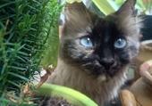 Lillii dans la jungle !