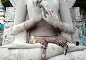 Sieste zen