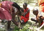 Chèvre grillée chez les Masaïs