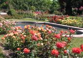 un bassin au milieu d'une roseraie