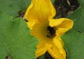 Une abeille..