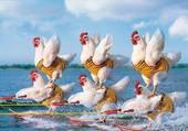 Cocotte-girls à l'eau