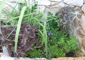 POTAGER FINES HERBES