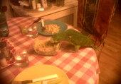 Puzzle greace perroquet