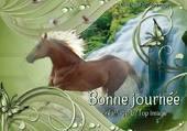 un cheval dans la nature
