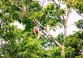 Visite du Cardinal