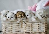 Puzzle panier de chatons