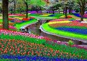 Puzzle tulipes en Holande