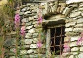 vieille fenêtre et épilobes