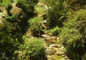 cascade dans les Cevennes
