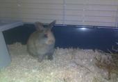 Puzzle Choupinou le lapin