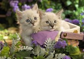 Deux chatons au jardin