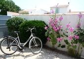 Fleurs et vélo