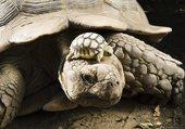 Maman tortue et sa progéniture