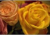 Dans le bouquet coloré.