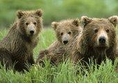 Puzzle Les trois ours