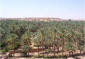 Paklmeraie Berriane Algérie