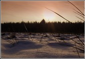 Les Fagnes en hiver