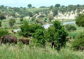 Éléphants en Tanzanie