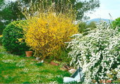 jardin passion