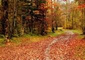 Puzzle Forêt en automne