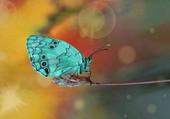 Puzzle papillon bleuté