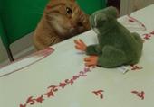Puzzle Chat et peluche