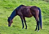 mon cheval de course libellule