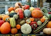 Puzzle Courges automne