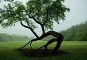 L'arbre étrange