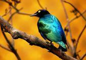 Couleurs d'oiseaux