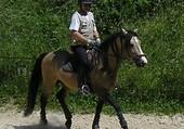 etalon pur race espagnol