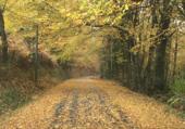 Féerie de l'automne .