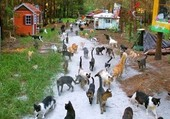 Puzzle colonie de chats
