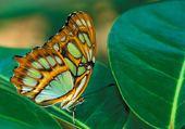 Puzzle Papillon exotique 2