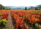 l'automne dans le vignoble varois