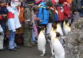 Kinder und Pinguine im Zoo