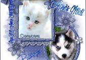 chat blanc et husky
