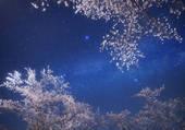 ciel étoilé derrière arbres blanchis