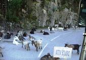 Puzzle Sur une route de Corse