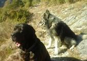 Bacchus et Lucky