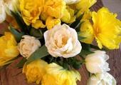 Fleurs des Pays Bas .