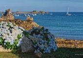 Puzzle Port Blanc en Penvénan