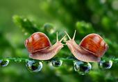 Escargot Love